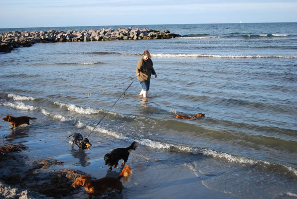 Strandausflug mit der Teckelgruppe