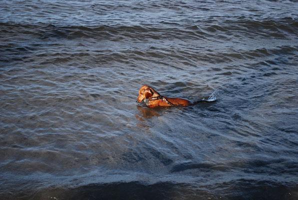 Ivo schwimmt