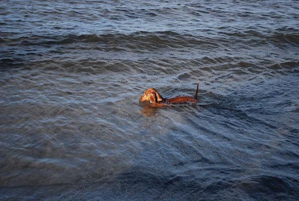 Ivo schwimmt immer noch und will auch gar nicht aufhören