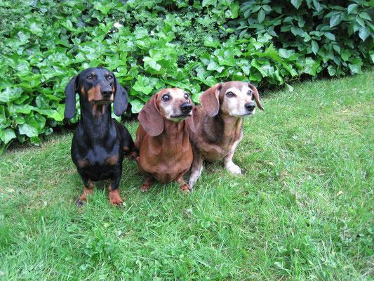 Die drei vom Grill :-)