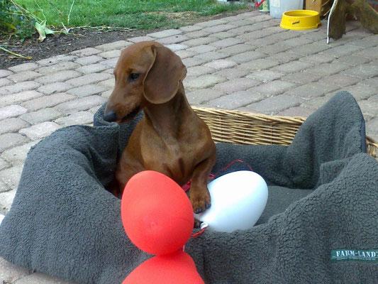 Ivo hat die Hochzeitsballons geklaut.