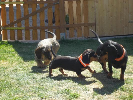 Spielen mit Bella und Rikke