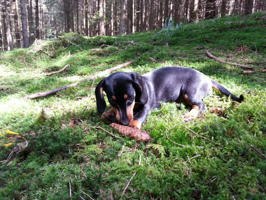 Lotte im Wald