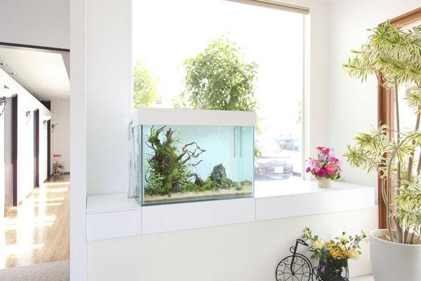 淡水魚水槽 病院設置事例