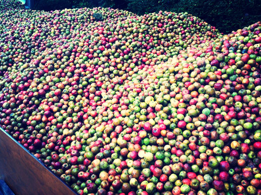Mixture of old varieties of cider apple
