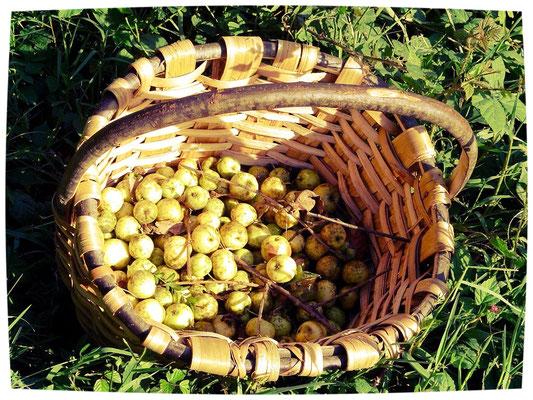 Basatia, ou pomme suavage pas plus grosse qu'une noix