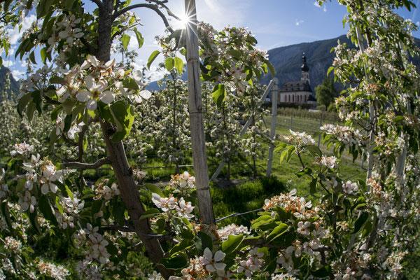 © Ötztal Tourismus Photograf Bernd Ritschel Bildbeschreibung Ötztal, Haiming, Apfelblüte, Blumen, Wiese, Kirche, Kirchturm, Sommer, Gras, blauer Himmel, Berge, Sonnenstrahlen, Landschaft