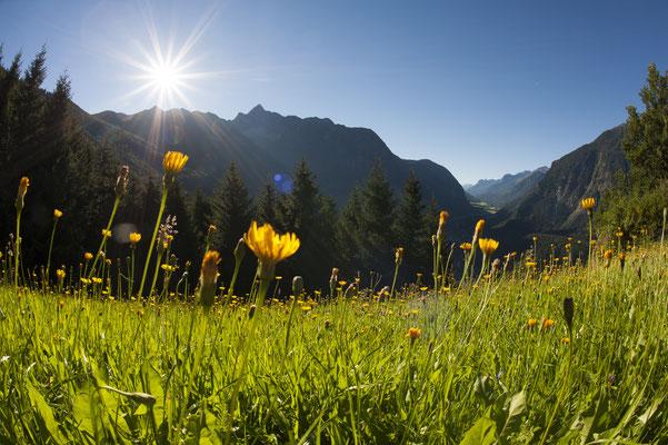 © Ötztal Tourismus Photograf Matthias Burtscher Bildbeschreibung Region Oetz, Acherkogel, Sommer, blauer Himmel, Wald, Bäume, Sonnenstrahlen, Berge, Stimmung, Landschaft, Blumen