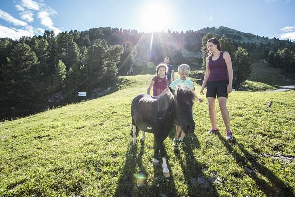 © Ötztal Tourismus Photograf eye5.li - Daniel Zangerl Bildbeschreibung Ötztal, Region Oetz, Almenregion Hochoetz, WIDIVERUM Hochoetz, Sommer, Familie, Kinder, Pferd, Haflinger, Pony, Wiese, Wald, Sonnenstrahlen, blauer Himmel