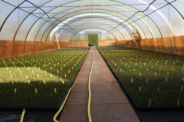 Verschiedene Jungpflanzen im Gewächshaus | Different youngplants in the greenhouse