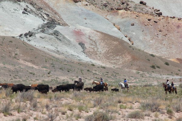 HIER TREIBEN DIE COWBOYS DIE RINDER ÜBERS LAND