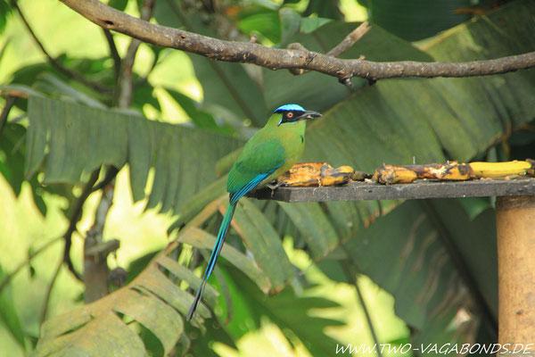 EXOTIK-BIRDS