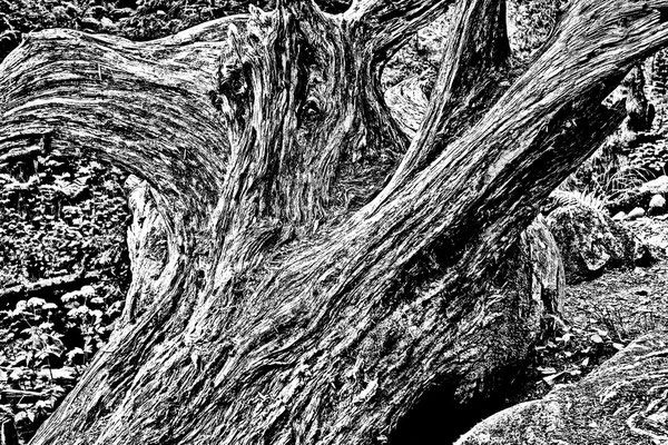 Wood sw41