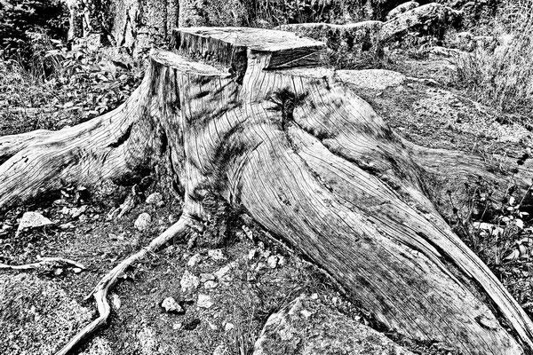 Wood sw43