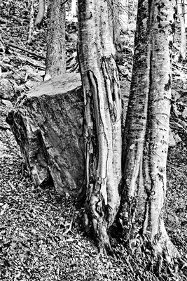 Wood sw15