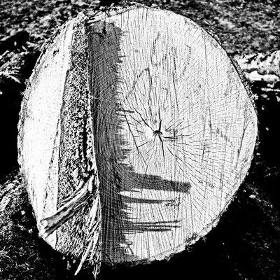 Wood sw28