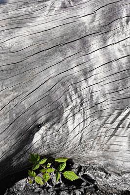 Wood sw44