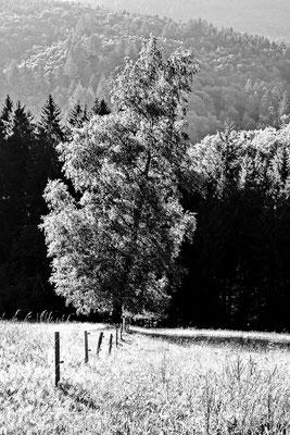 Wood sw05