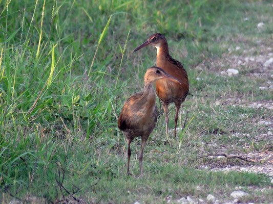 A  Pair of King Rails