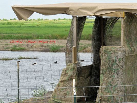 OUR NEWEST PHOTOGRAPHY BLIND OVERLOOKING THE WETLANDS