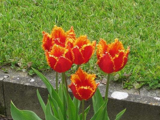 Dann auf eine wunderschöne Tulpenpracht