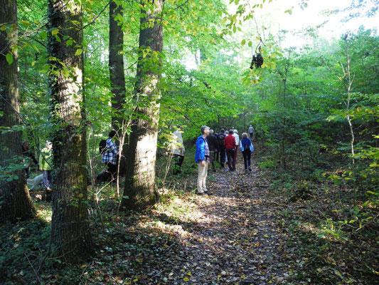 Wir treffen uns am Sportplatz in Spradow und starten einen kurzen Weg durch den Wald