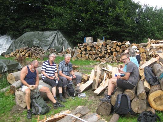 auf extra für uns zersägten Baumstümpfen