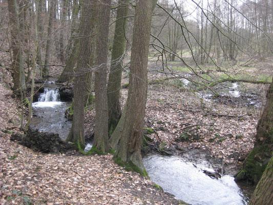 """Und da taucht er plötzlich auf: Der größte Wasserfall von Bad Oeynhausen. Auch tauglich als """"Halbkörper""""-Dusche"""