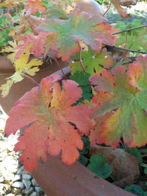 die Herbstfärbung des Strochenschnabel  dient als farbliche Vorlage zu einem Handgewebe