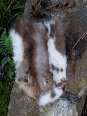 Nacharbeitung der Gürteltasche aus Altenberg : die Pelzseite