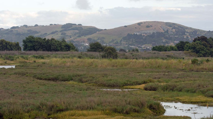 Salt Marsh, Greenbrae