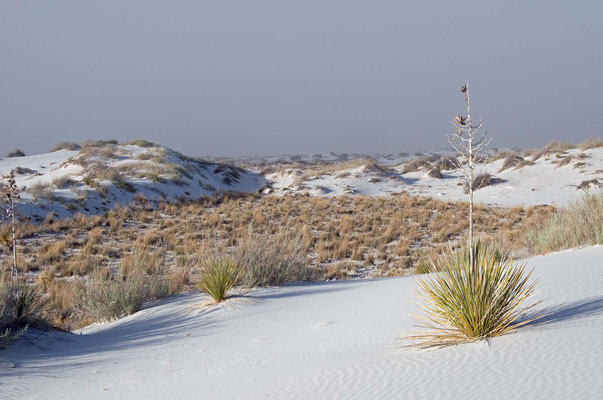 White Sands National Monument am Abend