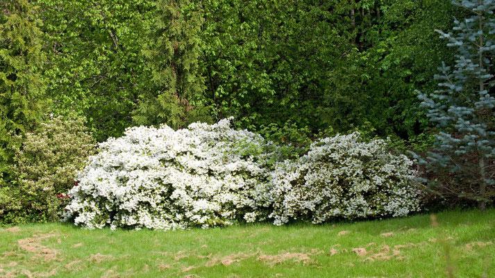 Rosen Garten, Washington Park, Portland