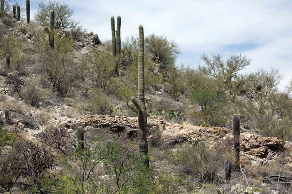 Saguaro National Park (East)