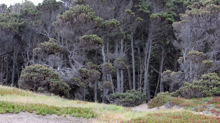 MacKerricher State Park, California