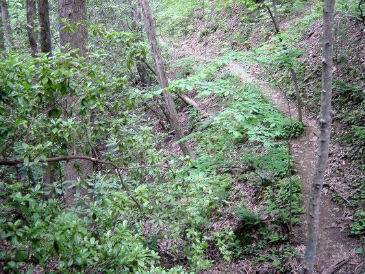Smith Creek Hiking Trail