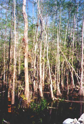 Big Cypress National Preserve Florida