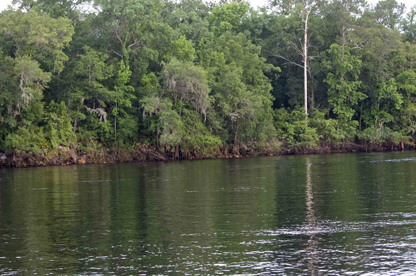 Suwannee River, Old Town