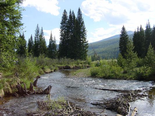 Am Timber Creek