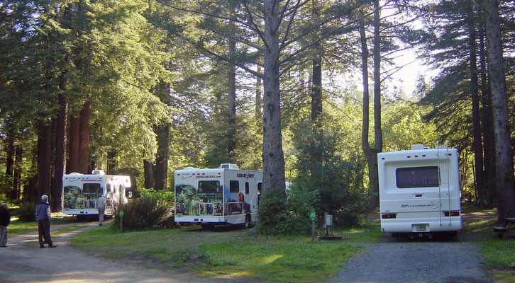 Campground Emerald Forest of Trinidad, California