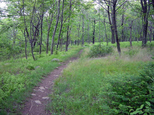 Appalachien Trail