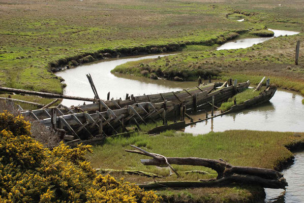 Bandon Marsh, National Wildlife Refuge, Oregon