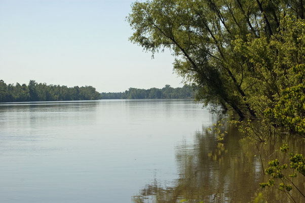 Atchafalaya River (Louisiana)
