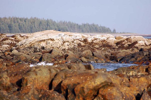 Acadia, Seawall