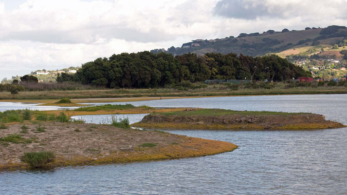 Salt Marsh (Corte Madera Wetlands)
