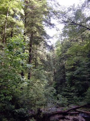 Dukes Creek Falls Trail