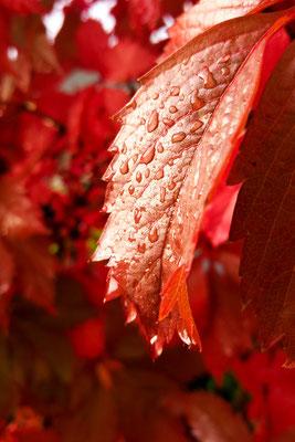 Herbstlaub mit Tropfen