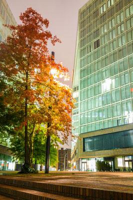 Herbstlaub in der Nacht