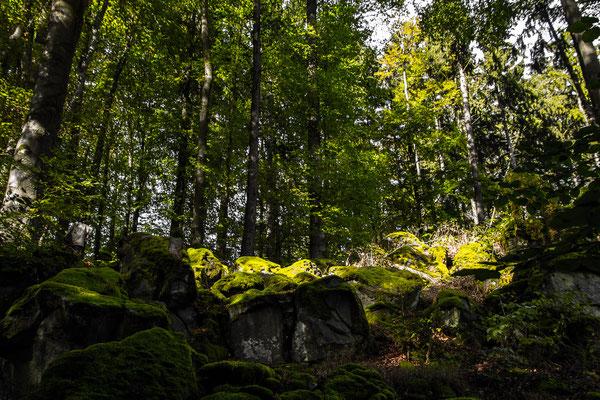 Ehemaliger Steinbruch von Moos bewachsen