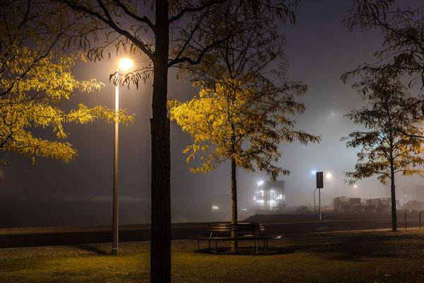 Bäume im Herbstnebel